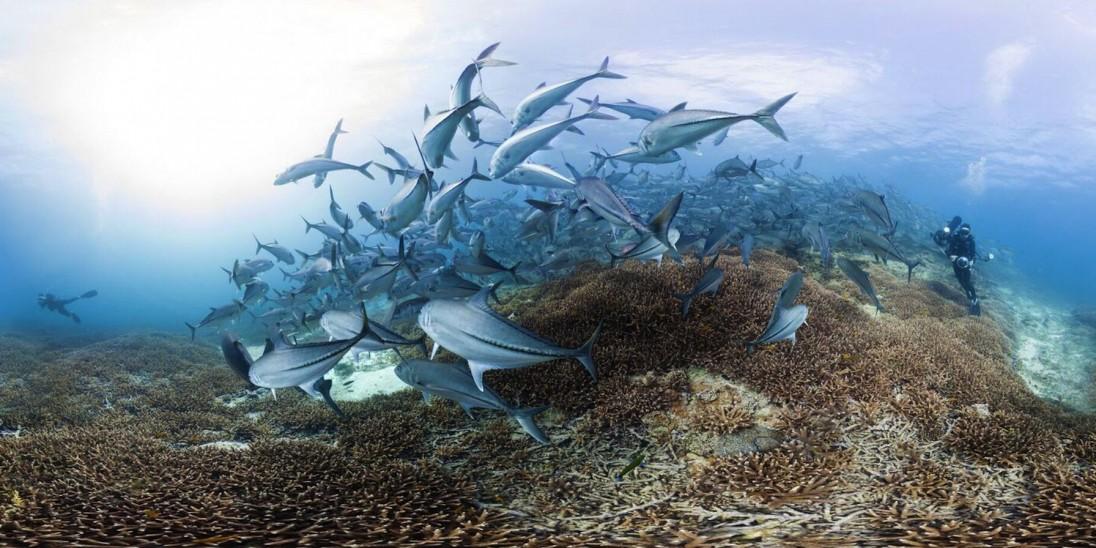 Chasing Coral fish