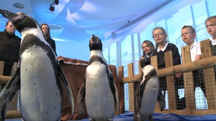 We sent four Humboldt penguins and a snowy owl to Worsbrough Common Primary
