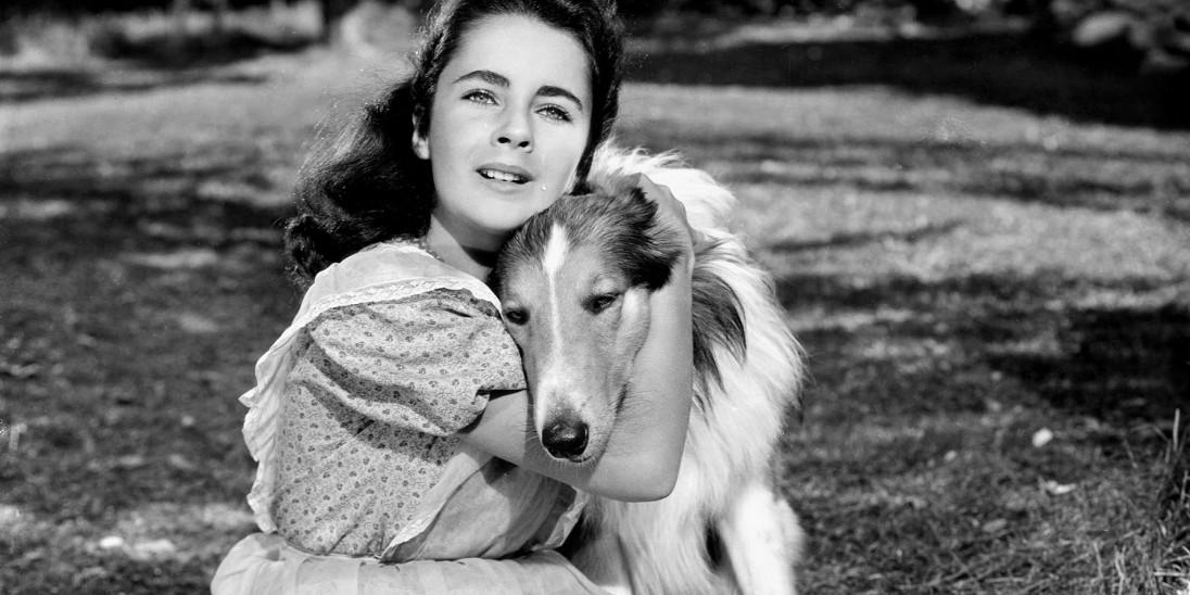 Lassie Boxset - Lassie Come Home