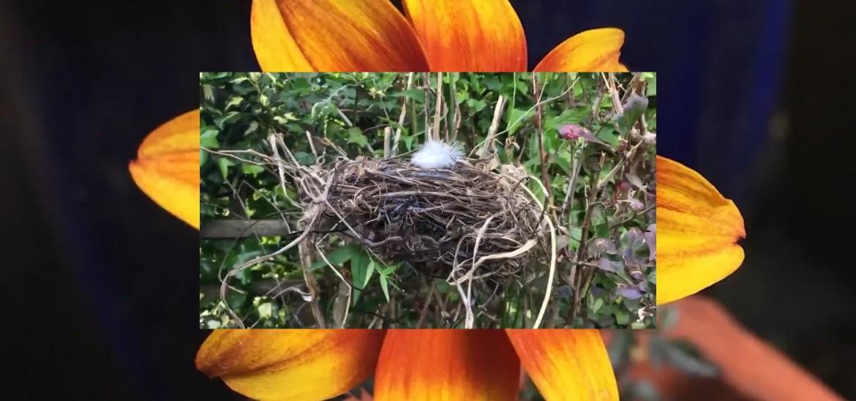 Nature in your Neighbourhood: The Winners