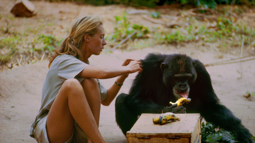 jane goodall and her research on chimpanzees Founded by renowned primatologist jane goodall,  when jane first stepped into the forest with her  protecting chimpanzees is at the heart of the jane.